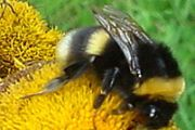 Honigmassage – Wohltat für den Rücken