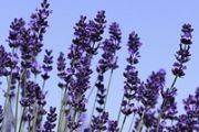 Aromapflege / Aromakultur